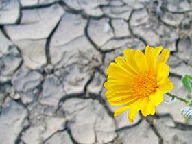 Resilience capacity
